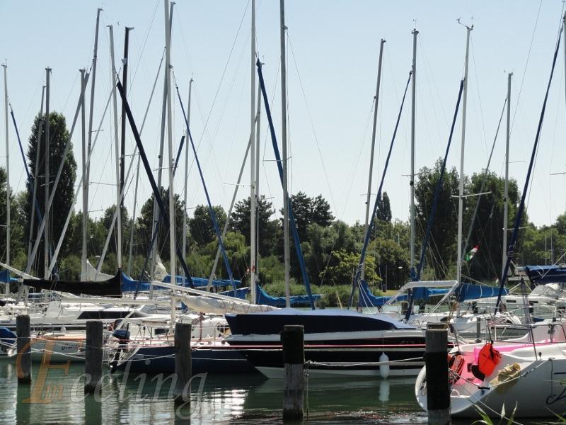 árbóckikötő (800x600)