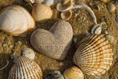 szívkő kagylókkal