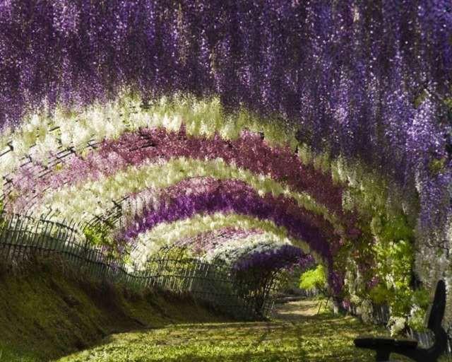 zenkert lila